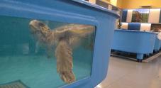 Centro ricerche tartarughe marine: porte aperte al pubblico