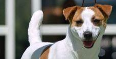 Immagine Uccide cane gettandolo dalla finestra: condannato