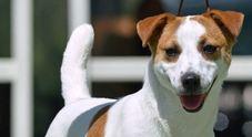 Uccide cane gettandolo dalla finestra: condannato