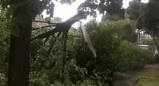 Spavento tra i turisti negli Scavi: il vento abbatte il ramo di un albero