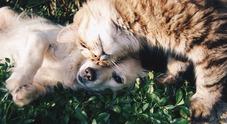 Svolta animal friendly a Torre: arriva il Garante degli Animali