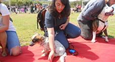 «Il cane più bello» per gli amici a quattro zampe meno fortunati