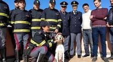 La cagnolina salvata sull'autostrada e arruolata nella polizia stradale