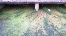 Mare verde alga, ora i lidi chiedono il risarcimento