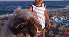 Bimbo salva una tartaruga e intrappolata nella plastica: la foto emoziona il web