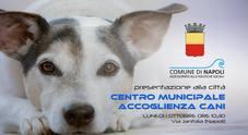 Napoli, nasce il centro per l'accoglienza e il benessere dei cani