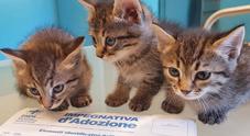 I gatti allungano la vita: combattono la depressione e fanno bene al cuore