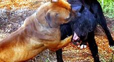 Processato per un rimprovero al cane: assolto 57enne