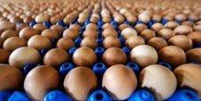 Immagine Ritorna la paura delle uova contaminate con antibiotici