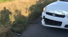 Alligatore attacca auto della polizia e scappa | Foto