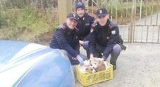Cagnolino porta la polizia fino al canale dove stava annegando un altro cucciolo: salvo