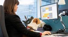 «Cani al lavoro», la banca Unicredit accoglie Fido con ciotole e giochi