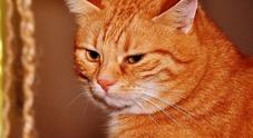 Francia, gatto si perde e torna a casa prendendo una Bla Bla Car
