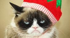 Morto il gatto musone più famoso del mondo: 2,4 milioni di fan su Instagram