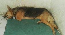 Cani avvelenati, appello dei volontari:  «Aiutateci a identificare questi killer»
