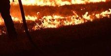Immagine Incendi in California, autista eroe salva 22 bimbi