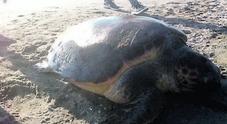 Strage di tartarughe marine: decapitate per superstizione
