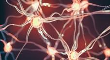 Alzheimer, un nuovo esame del sangue può smascherarlo anni prima dei sintomi