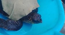 Castellammare, tartaruga ingerisce amo da pesca: salvata dalla guardia costiera