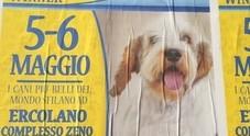 I cani più belli del mondo nell'expo al complesso Zeno