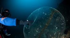 Punta Campanella, incontro al mistero sulle «sfere gelatinose»