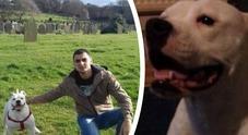 Si lamenta per gli schiamazzi in strada: i teppisti si arrampicano e uccidono il suo cane