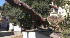 C'era una volta Naplest: viaggio nel cimitero degli orrori a Poggioreale
