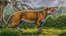 Kenya, scoperto un Leone Gigante di 20 milioni di anni fa: pesava come un elefante