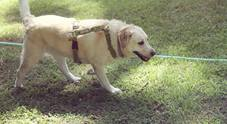 Rivoluzione Pet-therapy a Napol: premiati i primi cani terapeuti