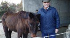 Grande festa per i 40 anni di Iroso, l'ultimo mulo alpino ancora in vita