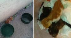 Tre gattini salvati al cimitero: abbandonati tra le tombe nel Napoletano