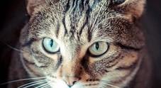 La gattina lanciata per festeggiare la fine dell'anno scolastico trova una casa e una famiglia grazie alla bidella