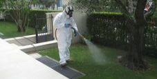 Immagine Zanzara tigre, rientra con la febbre dengue