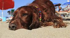 Cani in spiaggia, via libera del Tar: i Comuni non possono vietarlo La sentenza