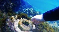 Mare bianco a Riva Fiorita, spuntano due scarichi pirata: ecco chi inquina
