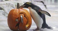 Halloween, maxi blitz della Finanza: sequestrati migliaia prodotti insicuri
