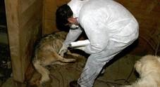 Scoperta villa-lager con 27 cani obbligati a vivere tra gli escrementi
