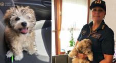 Vigilessa adotta cagnolina usata per chiedere l'elemosina