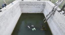 Tragedia nel parco d'Abruzzo: tre orsi annegano in una vasca