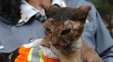 Liberati 59 gatti malridotti: erano nell'appartamento di un disabile mentale