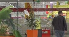 Napoli, il grande spreco del supermercato Auchan: «Diamo ai bisognosi il cibo in scadenza»