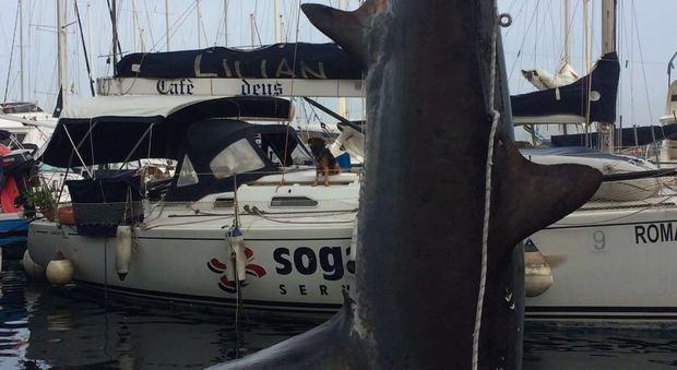 Squalo enorme pescato nel golfo di Napoli e portato al borgo Marinari