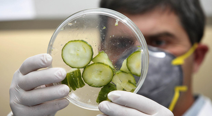 Focolaio Salmonella in Ue: 147 casi dopo cibi pronti