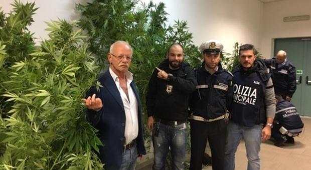 Portici, municipale scopre serra di marijuana nel giardino di una villa