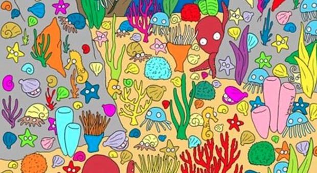 Riuscite a trovare il pesce tra crostacei e meduse? Ecco il rompicapo dell'estate che fa impazzire il web