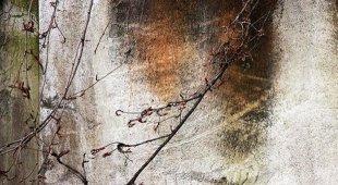 «Da una trifora, sul cortile dell'attualità» alla Galleria Area24 space