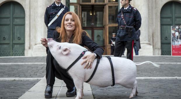 Michela Vittoria Brambilla a Montecitorio con un maiale al guinzaglio