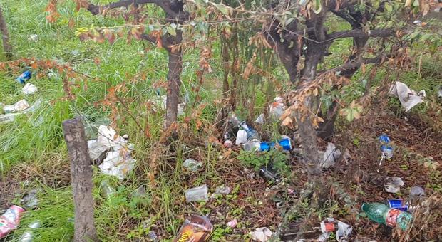 Degrado giardini piazza Mazzini, tra alberi pericolanti e cumuli di rifiuti