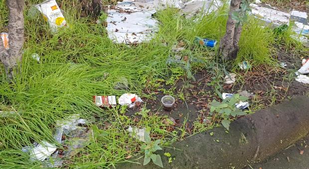 Il disastro delle aiuole di piazza Mazzini, tra rifiuti, alberi pericolanti e degrado