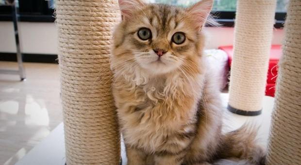 Festa nazionale del gatto, oggi si celebra il nostro amico felino